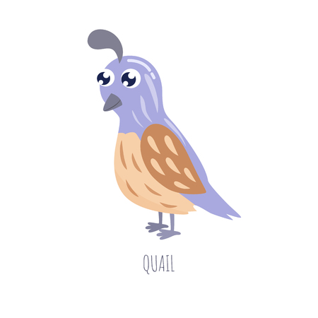 Cute cartoon quail vector illustration.  イラスト・ベクター素材