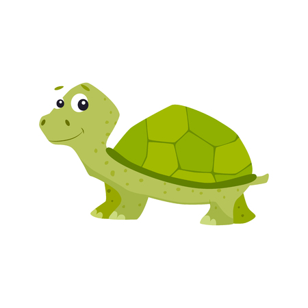 Cartoon turtle vector illustration.