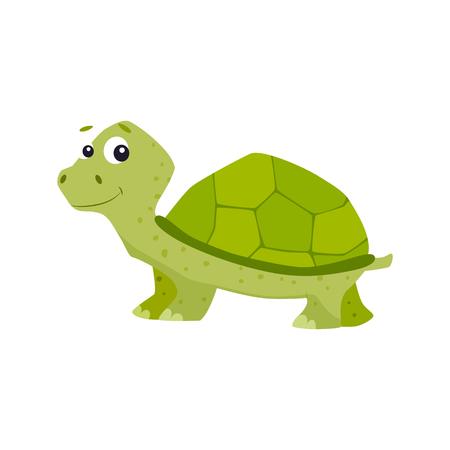 Ilustración de vector de tortuga de dibujos animados.