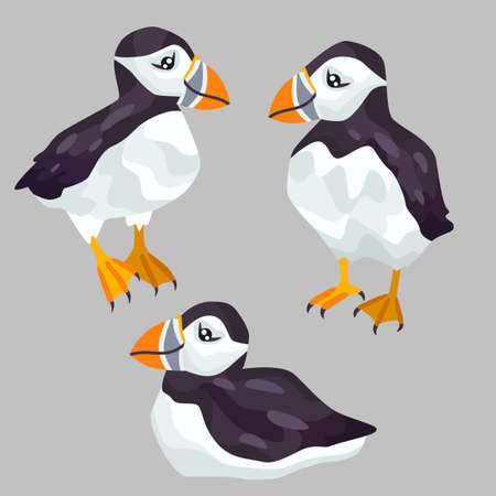 Cute puffins vector illustration.
