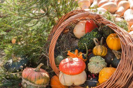 Autumn mabon pumpkin festival sunny day background