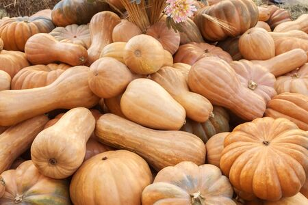 a lot of brown orange pumpkins on the ground outdoor farmers market