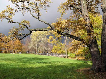 tsarskoye: Old oak tree in the Catherine Park of Tsarskoye Selo Pushkin near Saint-Petersburg