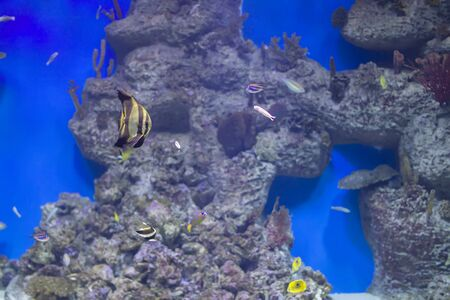 colorful tropical exotic fish on the background of the reef