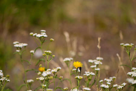 Meadow flowers and herbs on a blurred background. Beautiful meadow nature in the evening.
