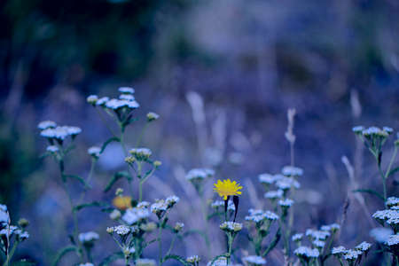 Meadow flowers and herbs on a blurred blue background. Unusual meadow. Imagens
