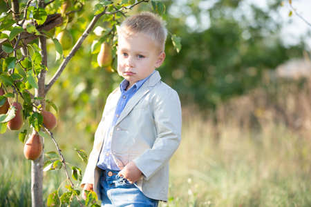 Funny sad little boy in an elegant suit near a tree with ripe pears. The little farmer is unhappy with the harvest.