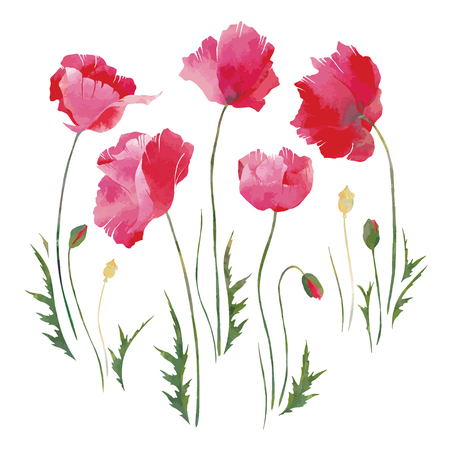 Vector red poppies with watercolor effect / Elements for you
