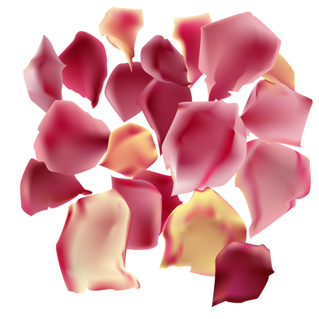 Vector picture of realistic rose petals. Isolated elements for your own romantic or summer design.