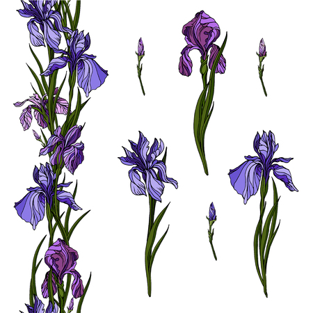 Vector iris flowers from hand drawn trace. Realistic blue and violet flowers and floral endless branch for your own summer design