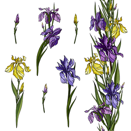 Yellow and violet iris flowers and floral iris endless branch. Archivio Fotografico - 101079758