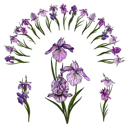Iris flowers arch and floral iris compositions. Archivio Fotografico - 101079757