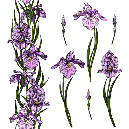 Iris flowers in pastel violet colors and seamless floral branch.