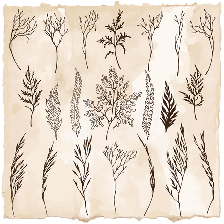 Vector of different dark brown silhouettes of herbs on vintage sepia colore background