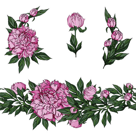 Realistic vector pink peony flowers in small bouquets and endless floral linear ornament. Elements for summer design Vettoriali
