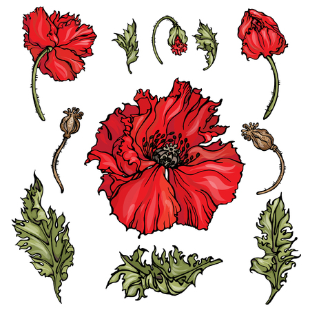 Vector isolated elements of red poppies: flowers, buds, leaves. For making you own floral design.