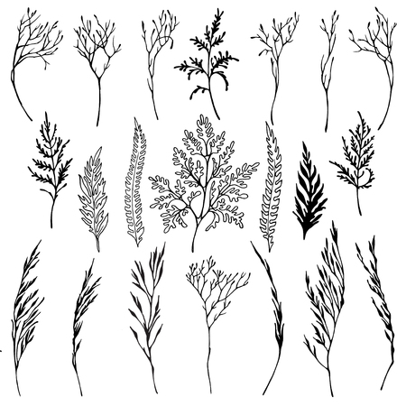 Vector graphic set of hand drawn herbs. Isolated black on white elements for design. Archivio Fotografico - 103797382