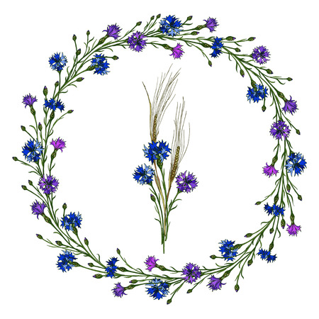 Vector cornflower wreath and bouquet of spikes and cornflowers. Elements for summer design of frames. Illustration