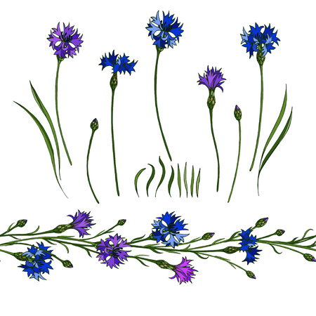 Vector cornflower set and seamless floral brush. Elements for summer design of frames. 일러스트