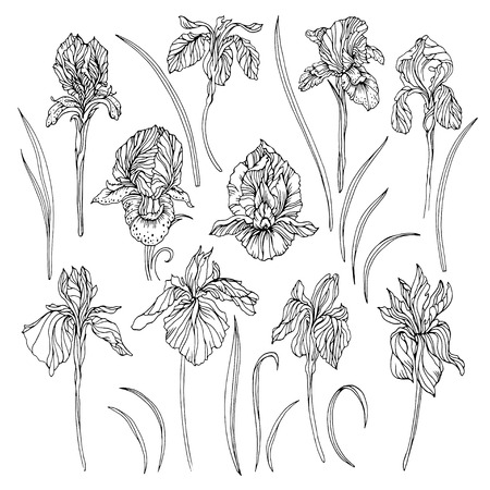 Vector set of different patterns of iris flowers and leaves. Black and white graphic art. Isolated on white elements for your own floral or summer design.