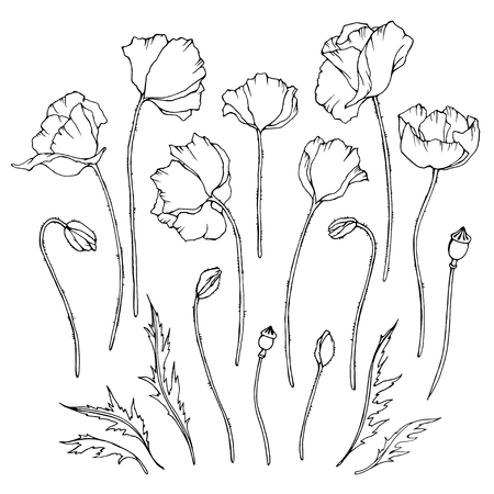 Vector set of black and white poppies flowers, leaves and buds. Linear graphic art. Elements for floral, summer, romantic design.