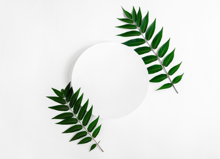 Creative Leaves Layout With Paper or Greeting Card on Light Background. Minimal Nature Concept. Flat lay. Copy Space 写真素材