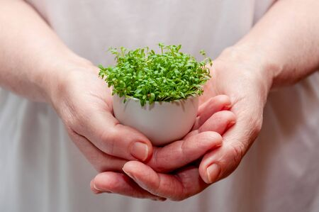 Close up Watercress Microgreens in Woman Hands. Banco de Imagens