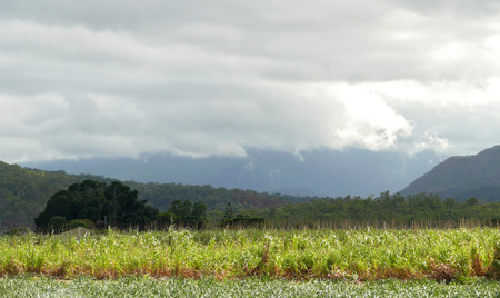 presentiment: Australia, Queensland.  Landscape of farming land  covered thundercloud.