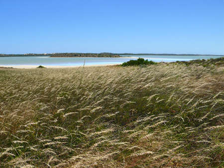 sparkled: Salty lakes with cereal sparkled herb near Robe, South Australia. Stock Photo