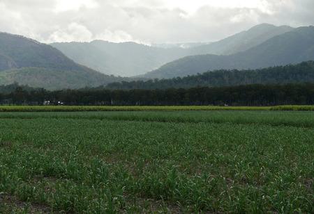 thundercloud: Australia, Queensland. Paesaggio di terreni agricoli coperti nube temporalesca. Archivio Fotografico