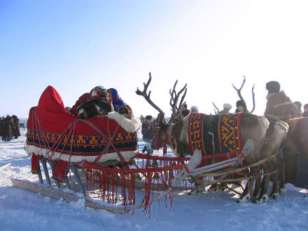 scolded: NADYM, RUSSIA - MARCH 2, 2007: Northern residents in national costumes. Reindeer pulling sleds in Nadym, Russia - March 2, 2007. National holiday. Editorial