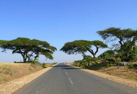 Amazing trees along the roadside. Africa, Ethiopia. Stock Photo