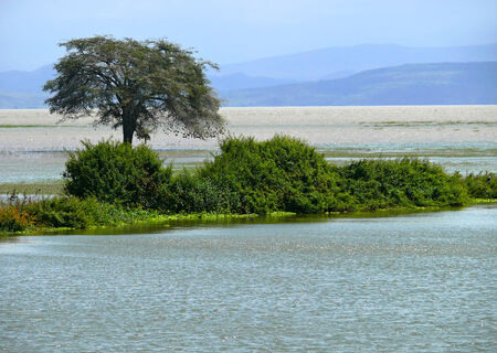 The Nile River closeup. Island overgrown with greenery and trees in the water. Africa, Ethiopia.