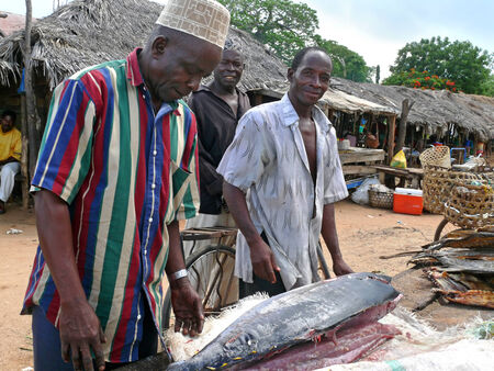 unknown men: MTWARA, TANZANIA - DESEMBER 3, 2008: The fish market. The settlement. Unknown men sell huge fish. Residential houses around in Mtwara, Tanzania - December 3, 2008.