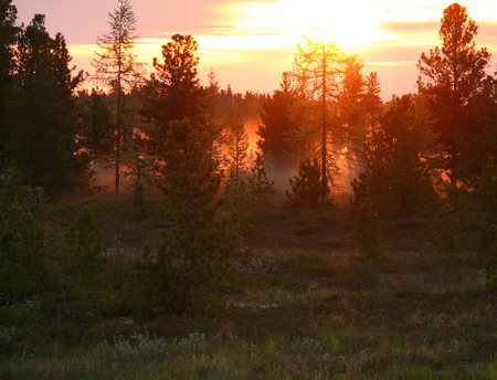 northern nature: The landscape of the Northern nature. Forest at sunset.
