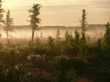 northern nature: The forest in the fog. The landscape of the Northern nature.