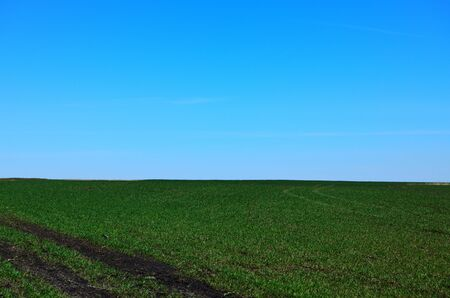 green spring field traces the road under the blue sky Imagens