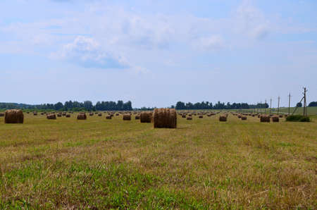 field on which straw was collected for feeding pets in winter. Agriculture