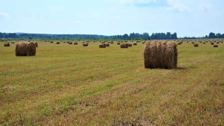 harvesting pet food, lots of hay bales on the field, agriculture with copy space