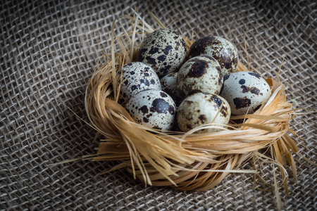 Quail eggs in nest. Heap of quail eggs in hay on sackcloth background Stock Photo