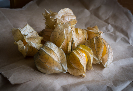 Dry physalis on paper