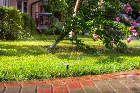 Automatic sprinklers for watering grass. the lawn is watered in summer. convenient for home. Alcea rosea flower