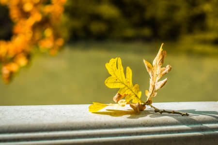 orange oak leaf lies against the background of the river and autumn trees. fall has come Stockfoto