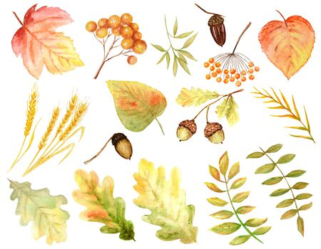 Bright colors set of watercolor autumn leaves. Wild grapes, elm, linden, rowan, pear isolated on white background