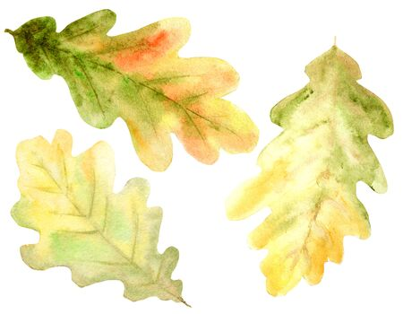 Beautiful bright colors set of autumn oak leaves, branches and acorns. Hand drawn illustration