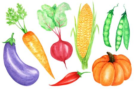 Watercolor painted collection of vegetables. Hand drawn fresh vegan food design elements isolated on white background.