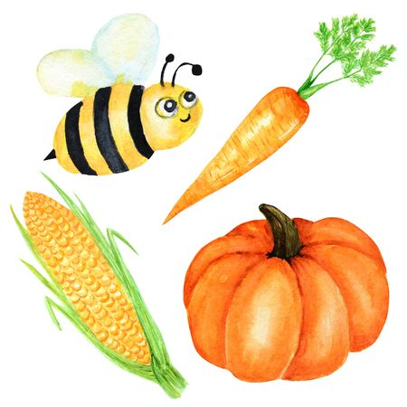 Watercolor painted collection of orange vegetables pumpkin, corn, carrot and bee insect. Hand drawn fresh vegan food on white background.