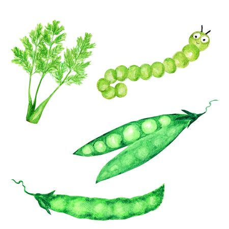 Watercolor painted collection of green vegetables and Funny caterpillar. Hand drawn fresh vegan food design elements isolated on white background. Stock Photo