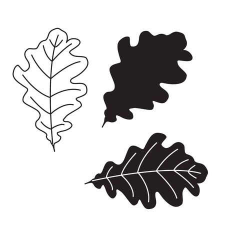 Beautiful black and white set of autumn oak leaves. Hand drawn vector illustration. Line art drawing leaf contur.