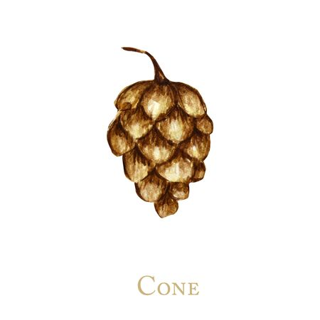 pine cone. Hand drawn Forest bump Nature sketches. Illustration concept for Christmas invitations, greeting cards, and other printing projects.